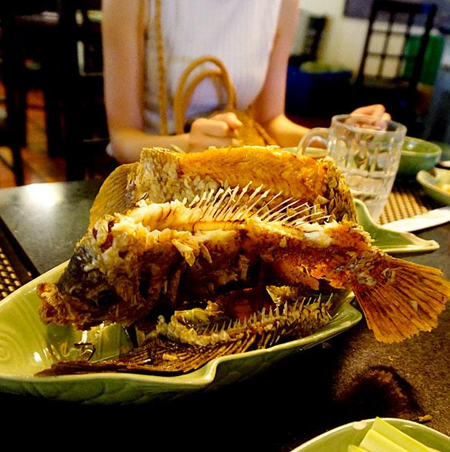 象耳魚(エレファント・フィッシュ)